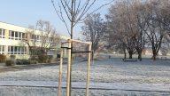 Nové stromy v našej škole